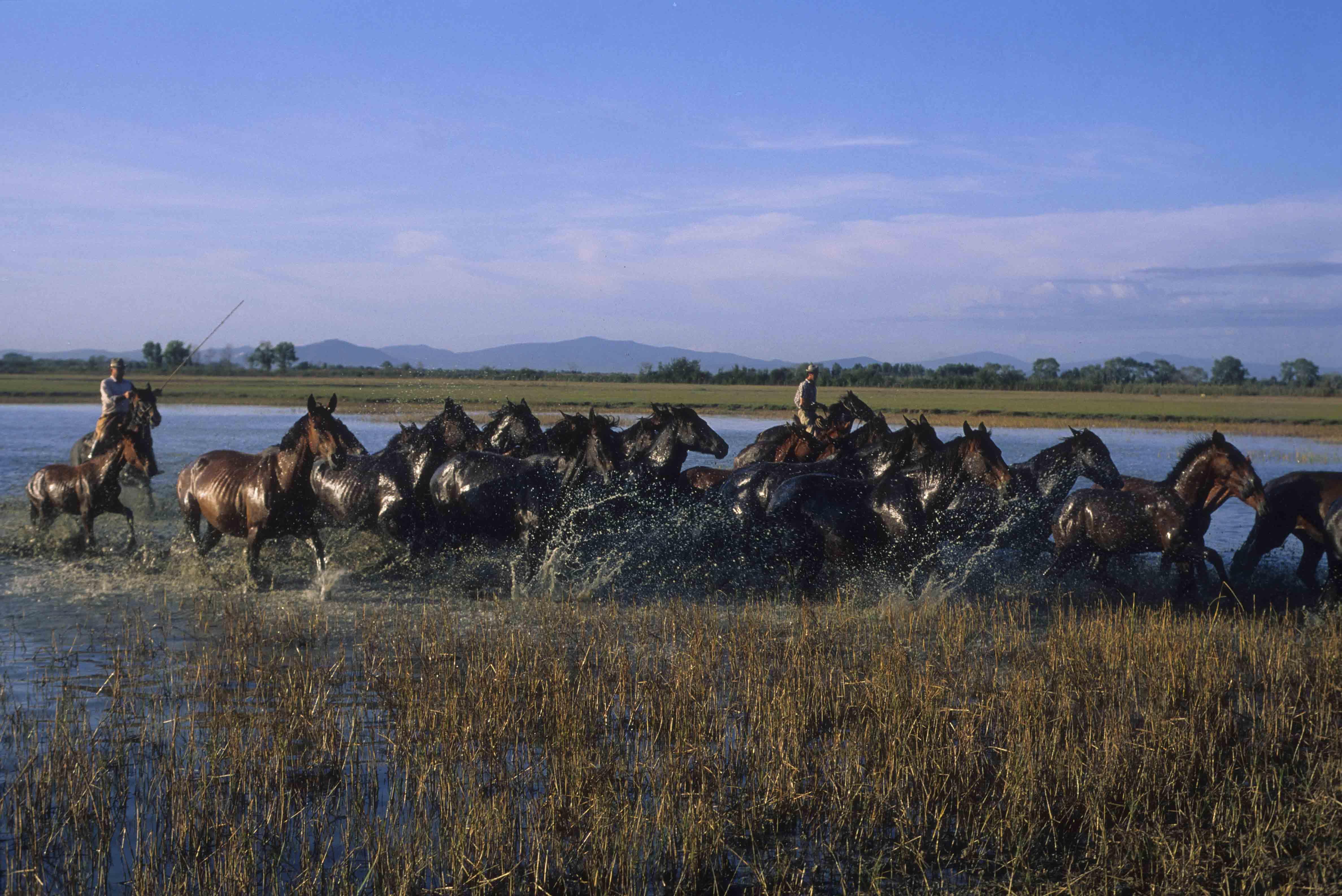 RID-passione MAREMMA Foto di Federico Martini-cavalli laguna