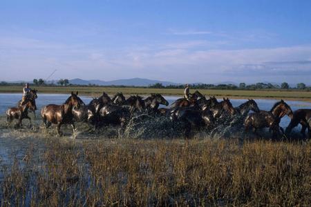 RID-passione-MAREMMA-Foto-di-Federico-Martini-cavalli-laguna