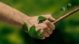 Festival dell'Ambiente e della sostenbilità