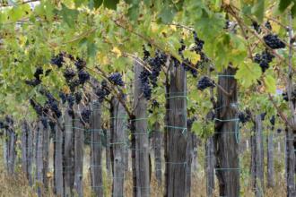 Consorzio Tutela Vini d'Abruzzo-2