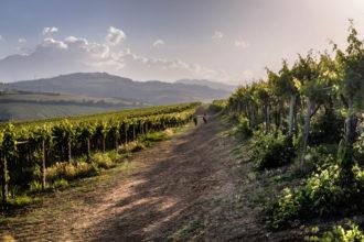 Consorzio Tutela Vini d'Abruzzo-1