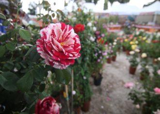 FlowerShow-1